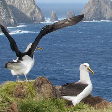 home-seagulls