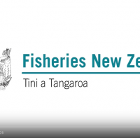 The definitive word on the leaked fisheries reports from MPI