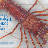 Sustainable seafood shines in eBook